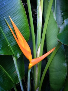 Bird of Paradise: An Exotic Orange Flower