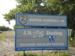 JN DING DARLING