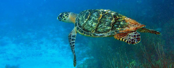 Sea Turtle Season Guidelines