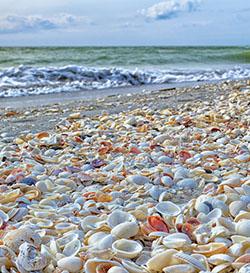 Sea shells Sanibel Island