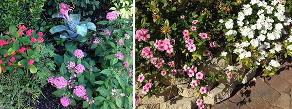 Sandalfoot Flowers