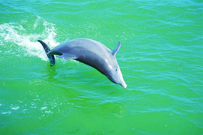 SWFL Gulf Coast Ocean Life