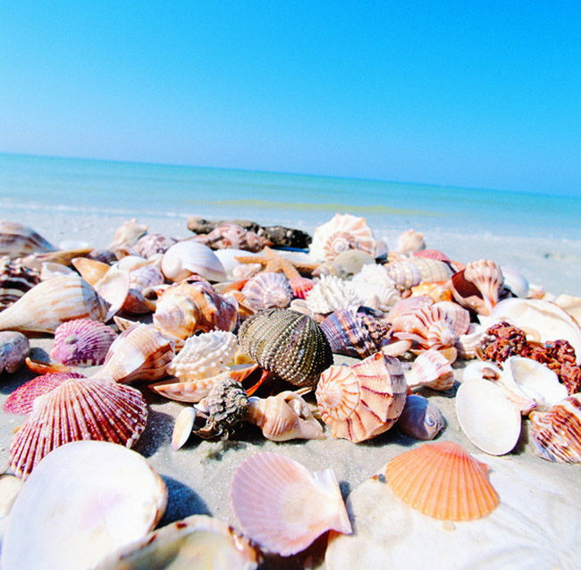 SWFL beaches seashells