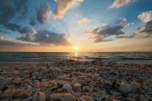 seashells over sunset